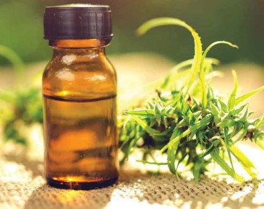 The right Supply for the CBD Oil